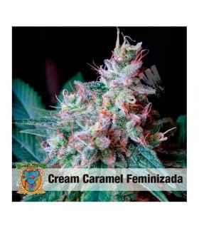 Semilla Feminizada Cream Caramel de Sweet Seed