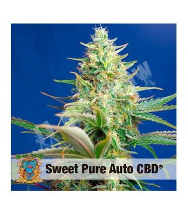 Semilla de CBD autofloresciente Sweet Pure de Sweet Seeds