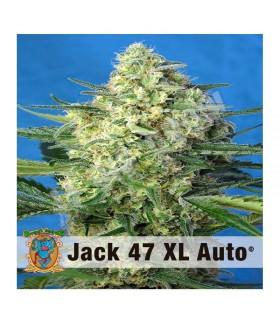 Semillas Autoflrecientes Jack 47 XL