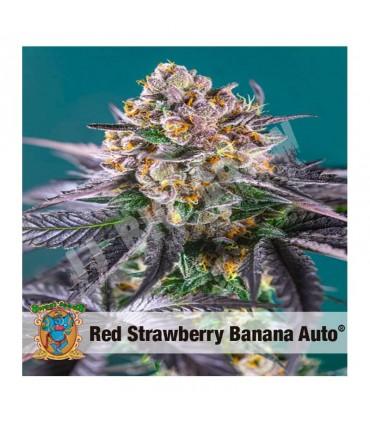 Semilla autofloreciente Red Strawberry Banana de Sweet Seeds