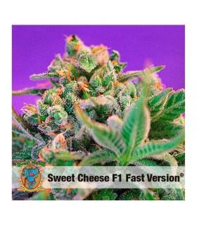 Semilla feminizada Sweet Cheese F1 Fast version de Sweet Seeds